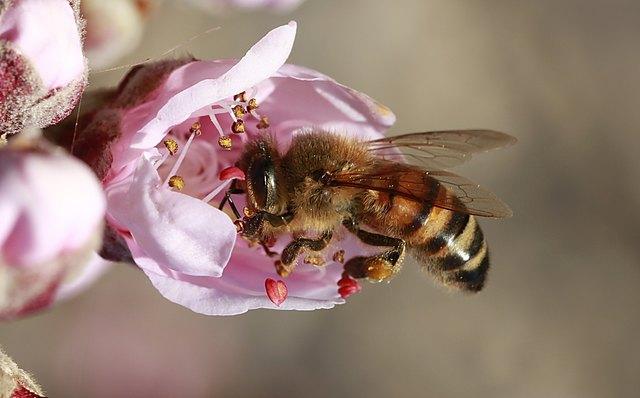 Im Rahmen des Klimaschutztages bietet die Initiative InSPEYERed in Zusammenarbeit mit der Bieneninitiative Speyer eine Pflanzaktion an, bei der jeder Besucher sich eine hübsche Insektenweide anlegen kann.