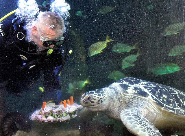 Meeresschildkröte Marty mit Geburtstagstorte.