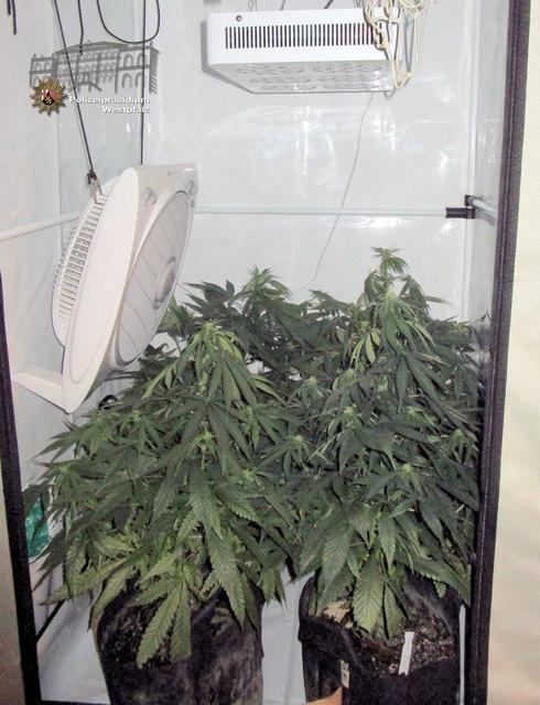 Mehrere sogenannter Grow-Schränke mit insgesamt 72 Marihuana-Pflanzen in verschiedenen Wachstumsphasen wurden sichergestellt.