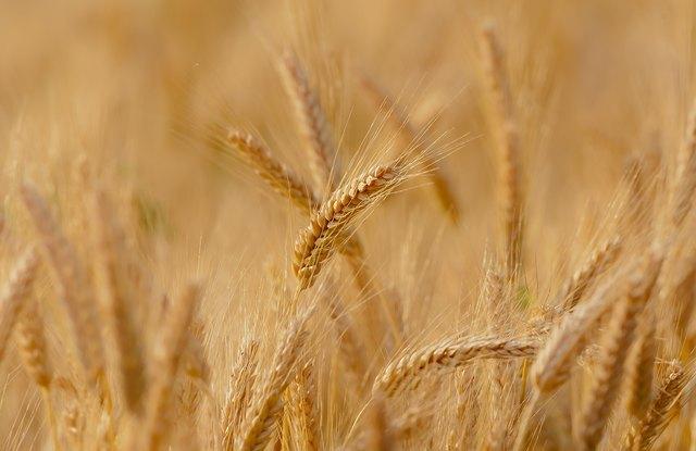 Landwirtschaft hautnah - am 27. Mai in Menzingen