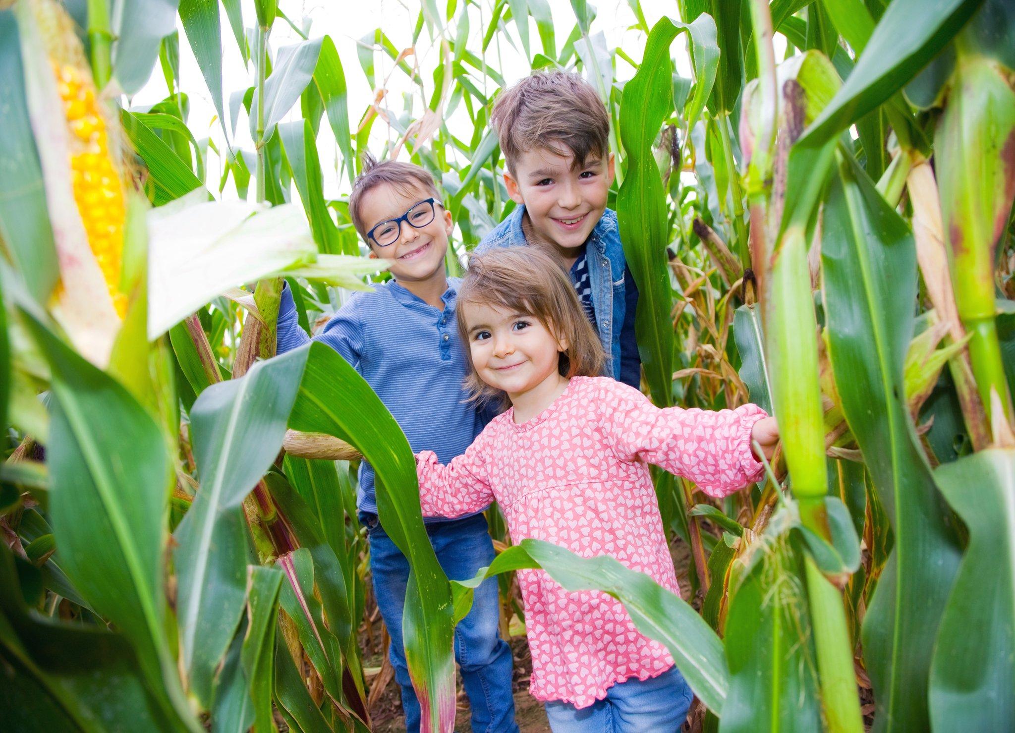 Seehof öffnet am 14. Juli wieder das Maislabyrinth: Spiel und Spaß ...