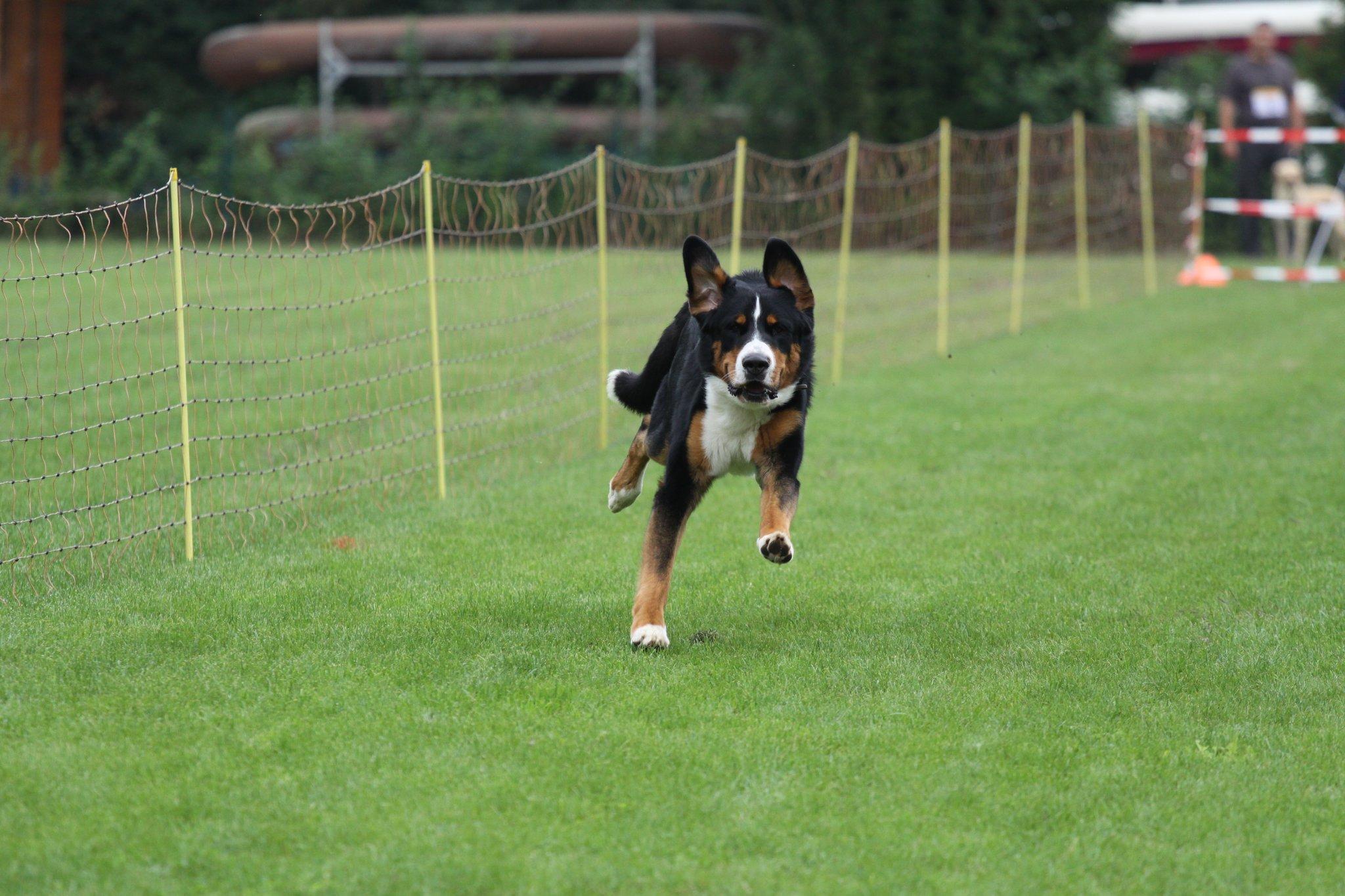 VfH Leimersheim lädt am 26. August zum Hunderennen: Schnellster Hund ...