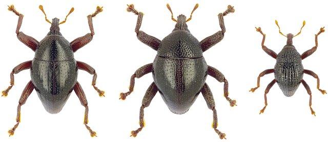 Kreative Namensgebung Für 103 Neu Entdeckte Käferarten Aus
