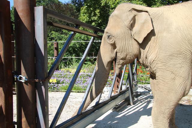 Zoo Karlsruhe Online Reservieren