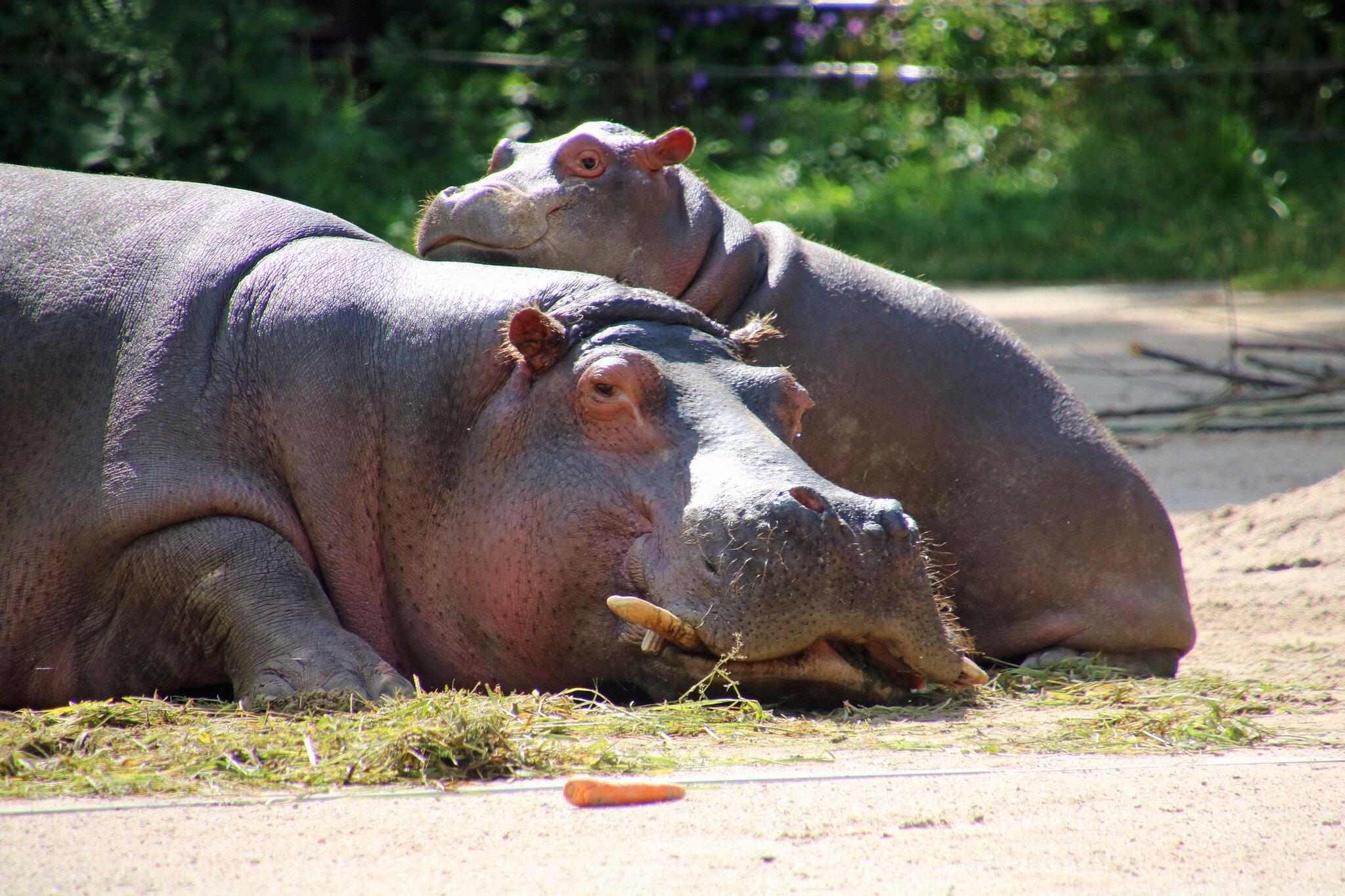 Zoo Karlsruhe Tickets Online Kaufen